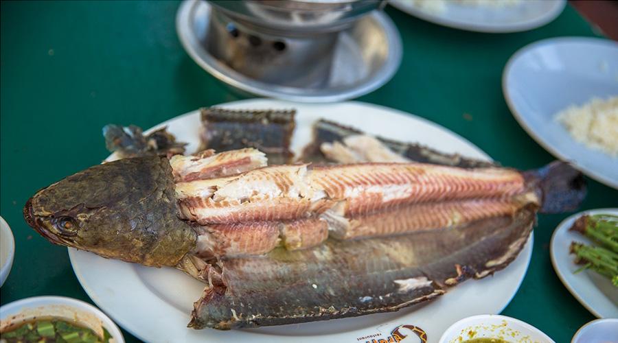 striped snakehead fish